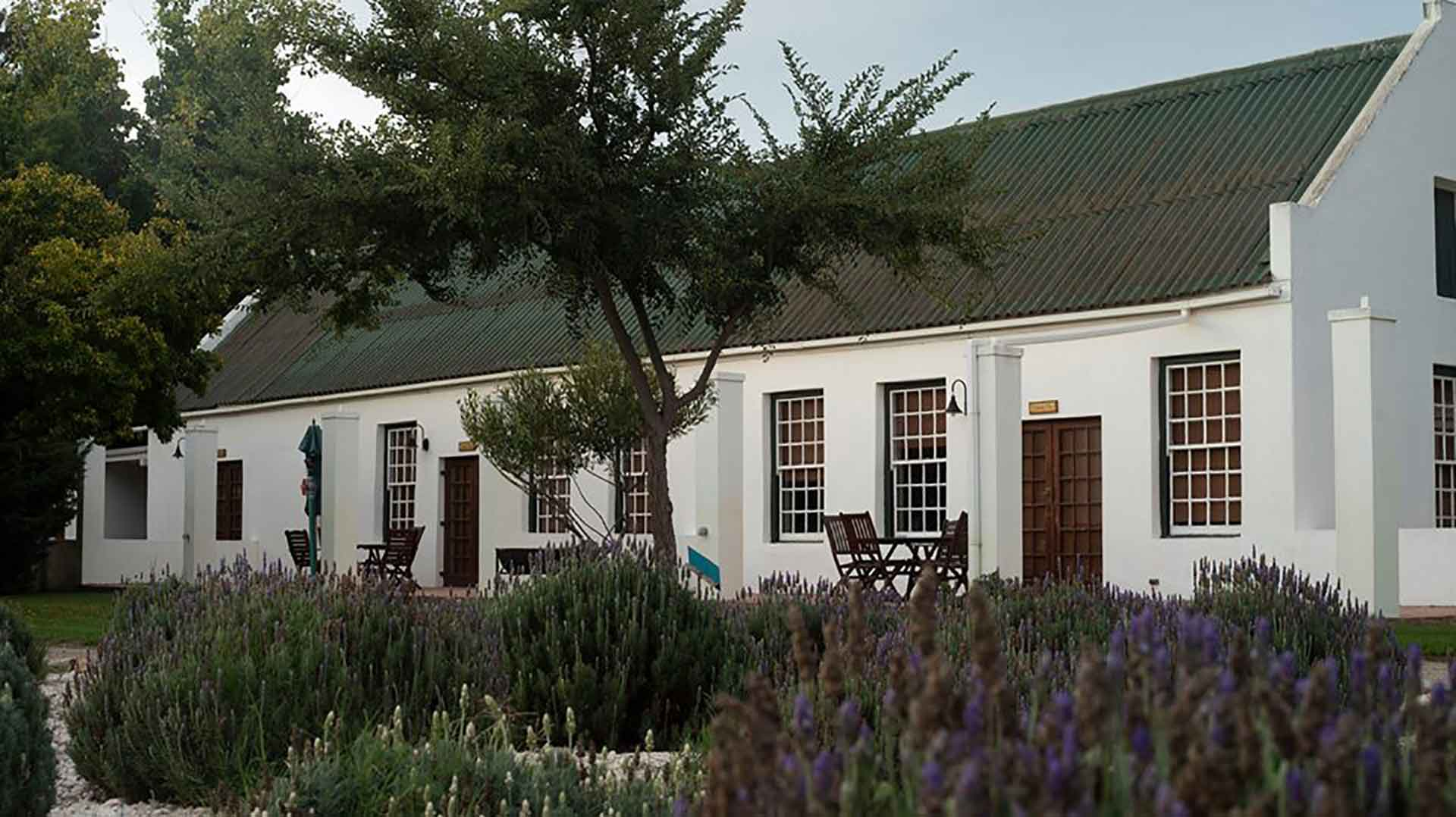 Accommodation, a lavender field in front of an old Cape Dutch building at Reeds Country Lodge wedding venue