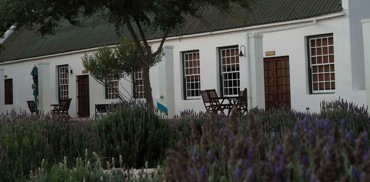 A lavender field in front of an old Cape Dutch building at Reeds Country Lodge wedding venue