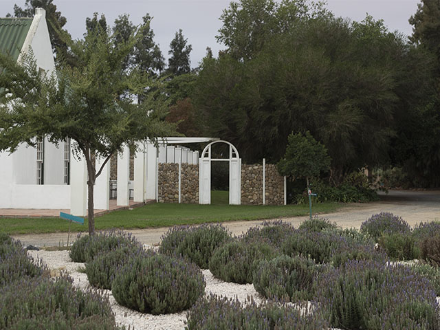 Garden Chapel with lavenders and a white arch at Reeds Country Lodge Wedding Venue is the perfect place for you wedding ceremony