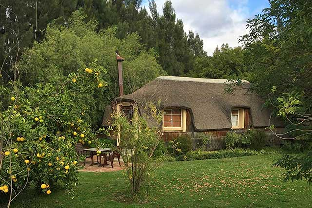 A thatched honeymoon hut in a green garden with a lemon tree at Reeds Country Lodge Wedding Venue