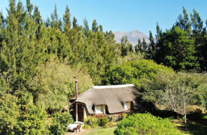The honeymoon hut at Reeds Country Lodge in greenery